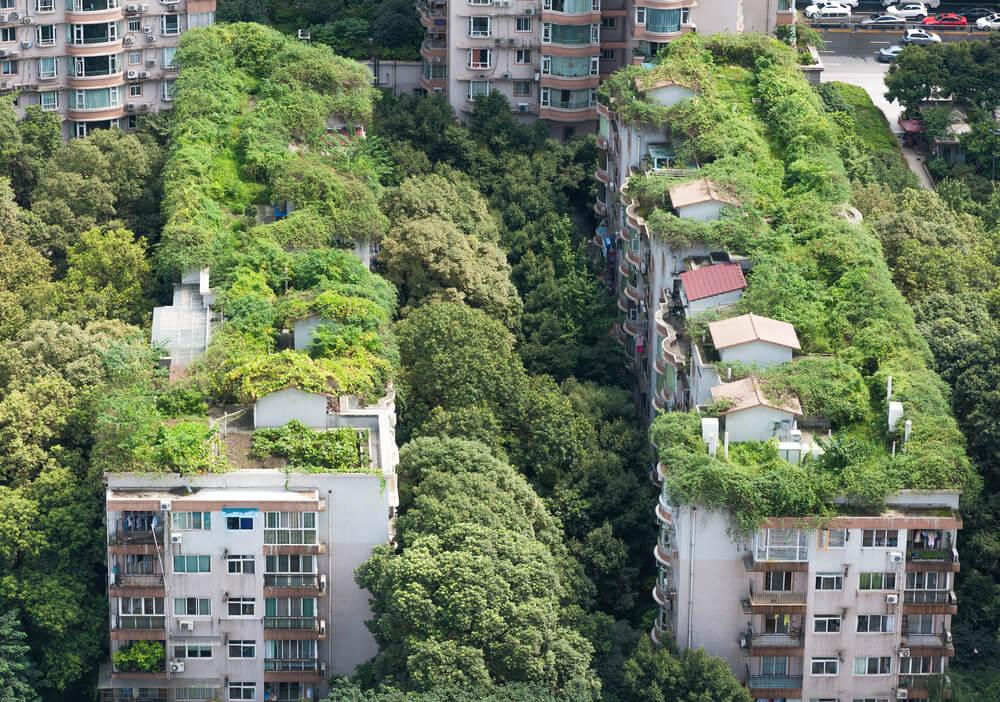 Construir tetos sustentáveis - França